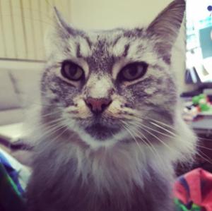 cat feline kitty
