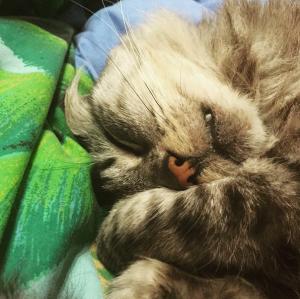cat kitty sleeping